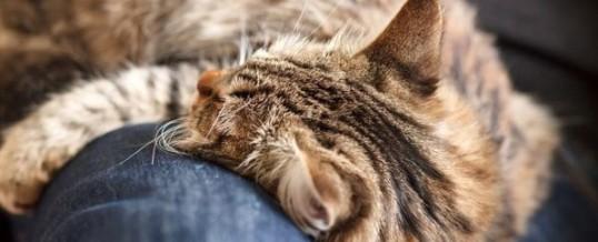 Звук кошачьего мурлыканья продлевает жизнь людям