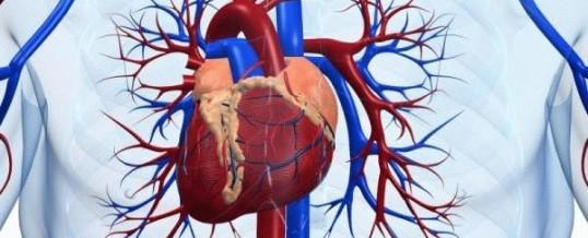 Кальцификация стенок артерий — ещё один фактор риска инсульта и инфаркта