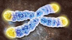 telomeres-dolgolife